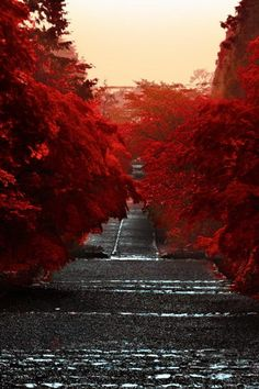 Red Autumn Nature Road Trees Wow