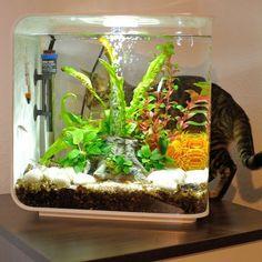 Тойгер кошки (фото): добродушный нрав в диком окрасе Смотри больше http://kot-pes.com/tojger-koshki-foto-dobrodushnyj-nrav-v-dikom-okrase/