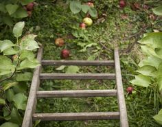 View from top of Apple Tree Mini Donkey, Moon Shine, Apple Tree, Poland, Outdoor Structures, Top, Crop Shirt, Shirts