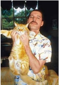 Freddie Mercury and orange tabby Now you know orange tabbies are cool