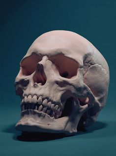 Skull, adam skutt on ArtStation at https://www.artstation.com/artwork/skull-98193640-07b1-4454-8f88-80f20ef236ed