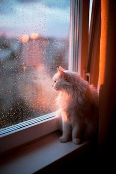 cats in the rain pictures I Love Cats, Crazy Cats, Cute Cats, Funny Cats, Animals And Pets, Baby Animals, Cute Animals, Cat Window, Photo Chat