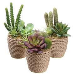 Lend Southwestern charm to your tabletop without any fuss or upkeep with this trio of faux succulents, nestled in rope containers. P...