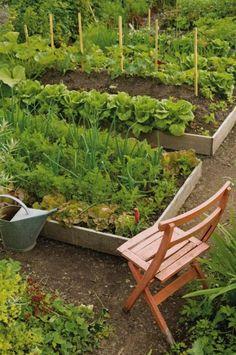 raised bed vegetable gardens