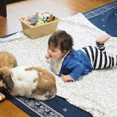 足パタパタして楽しそうな赤ちゃん うさぎさん大好き🐰❤️ ・ ・ ・ ・ ・  #赤ちゃん #ベビー #かわいい #肉 #女の子 #生後7ヶ月#0歳 #baby #babygirl #cute #育児 #子育て#babystagram #子供 #うさぎ #ロップイヤー #rabbit #rabbitstagram #bunny #ペット #bunbun #bun #pet #pets #petstagram #petsofinstagram #bunnies #bunnystagram #bun