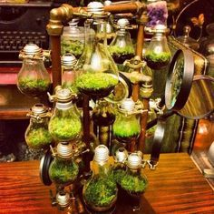 Steampunk Terrarium I would do this but not as many makes it look to busy maybe 5 Id also do different plants in each Mini Terrarium, Terrariums, Garden Terrarium, Steampunk House, Steampunk Design, Steampunk Diy, Gadgets Steampunk, Steampunk Costume, Steampunk Dress