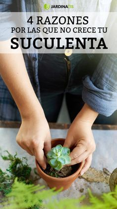 Best 9 4 razones por las que no crece tu suculenta – Jardinatis Möchten Cacti And Succulents, Planting Succulents, Hampton Garden, Growing Greens, Plants Are Friends, Fall Planters, Ground Cover Plants, House Plants Decor, Foliage Plants