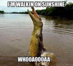Thankfully, walking is a great alternative. Animal Captions, Funny Animals With Captions, Funny Animal Quotes, Animal Jokes, Funny Animal Pictures, Cute Funny Animals, Funny Cute, Funny Photos, Scary Funny