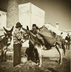 """Série exposição """"Motivos do Sul. Algarve, 1943/45. Algarve, Old Photos, Camel, Black And White, Country, Photography, Animals, Anthropologie, White Photography"""