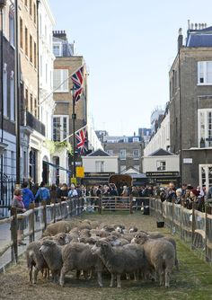Savile Row, filled with Sheep
