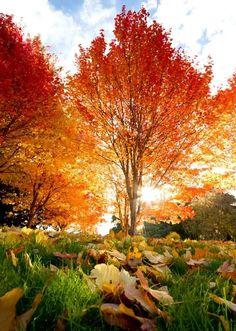 [Otoño] » Fall