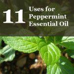 11 Uses of Frankincense Essential Oil - AJA Health