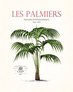 Vintage French Palm Tree Collage No.7  Giclee par BelleMerGraphics