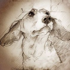 """Dachshund Looking Up"" Detail of a Leonardo da Vinci style drawing"