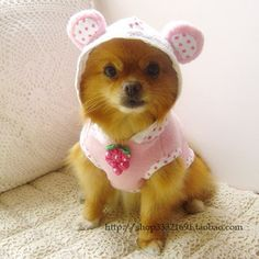 Image detail for -Wholesale Dog Clothes Pet clothing cutting pattern, matrix, ears ...