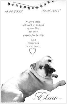 My sweet Bulldog Elmo....I miss him very much!