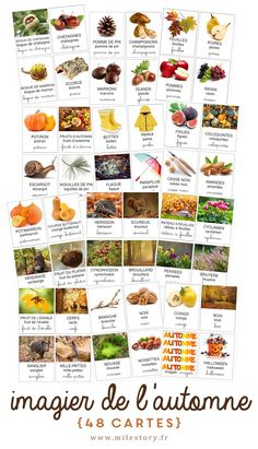 48 autumn imagery nomenclature cards & selection of books + activities – Milestory Seasons Activities, Activities For Kids, Montessori Activities, French Education, Petite Section, Education Degree, Card Book, Flashcard, Learn French