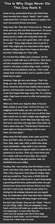 dog letter