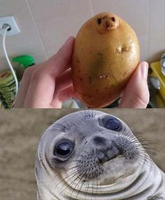 It& just so nice - l - Funny Memes Animals - . - This is just so beautiful – l – Funny Memes Animals – - Funny Animal Jokes, Cute Funny Animals, Funny Animal Pictures, Cute Baby Animals, Odd Pictures, Awkward Pictures, Animal Humor, Animal Quotes, Wild Animals