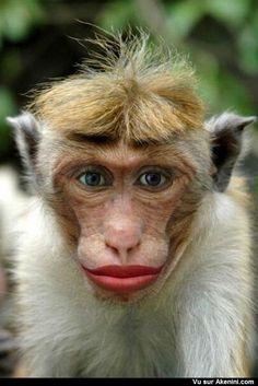 Singe marquillé - Sexy mokey