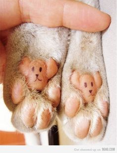 Cat feet turned into teddy bears!