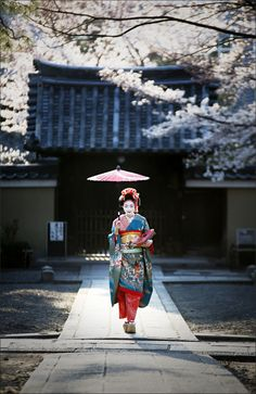"""Spring and Geisha...Geisha are traditional, female Japanese entertainers, whose skills include performing various Japanese arts,  such as classical music, dance and performance in front of customers.Apprentice geisha are called maiko. This word is made of mai in Japanese meaning """"dancing"""" and ko in Japanese meaning """"child""""....."""