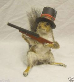 Anthropomorphic Taxidermy #hunting #taxidermy #squirrel