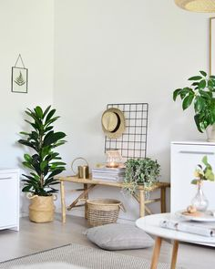 Plants decorating.
