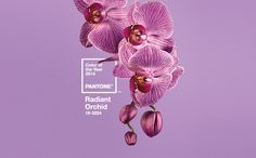 PANTONE Color of the Year 2014 Radiant Orchid Graphics - Radiant Orchid - Pantone Color of the Year - Color trends, color palettes , Pantone TCX.<br> PANTONE Color of the Year 2014 Radiant Orchid symbolizes renewal. Composition D'image, Orchid Color, Pink Color, Gray Color, Blog Deco, Fuchsia, Purple Ombre, Purple Nails, Grafik Design
