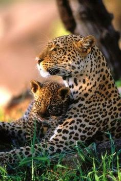 Mother & son ~ Dreamy Nature