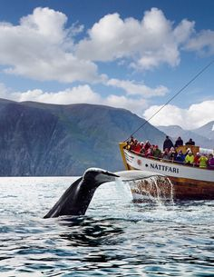 Whale watching in Iceland...