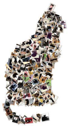 50+ Shades of Brorsan (my cat :)  http://inredningsvis.se