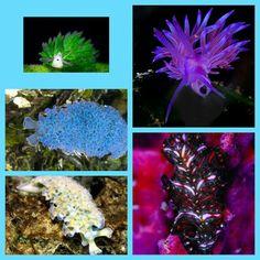 Sea slugs collage 8