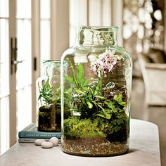 Garden Under Glass | Peek through the glass to see a little magic—vibrant color guaranteed to brighten winter's gray light. To make a terrarium, choose a glass container with an opening wide enough for your hand.