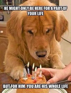 So sad - Funny Dog Quotes - I cried a little.I have a sweet golden retriever and he is getting old The post So sad appeared first on Gag Dad. Love My Dog, Amor Animal, Animal Fun, Funny Animal, Tier Fotos, Dog Quotes, Animal Quotes, Animal Memes, Dog Best Friend Quotes