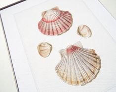 Dusty Pink Scallop Shell Study 1 Archival Print on Watercolor Paper Shell Tattoos, Scallop Shells, Antique Illustration, Print Wrap, Dusty Pink, Watercolor Paper, Fine Art Prints, Antiques, Drawings