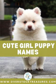 Hello pet lovers, dog lovers, dog owners and puppy owners. Are you a new pet owner? Did you just get a cute puppy or cute dog? Congrats! I created a list of unique dog names girl list. You are welcome to have my wonderful list of dog names girl unique list. This list is also for dog girl names for puppies. They are cut and unique puppy names female dogs.#puppy #puppynames #names #dognames #dog #doglove Cute Girl Puppy Names, Girl Names, Pet Memorial Gifts, Dog Memorial, Puppies Names Female, Cute Puppies, Cute Dogs, Unique Cat Names, Pet Loss Grief