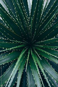 Close up of tropical plants growing in greenhouse conservatory by Rialto Images - Cactus, Yucca - Stocksy United Green Plants, Tropical Plants, Cactus Plante, Plants Are Friends, Agaves, Green Life, Cacti And Succulents, Succulent Planters, Succulent Arrangements