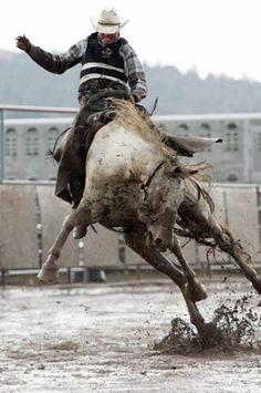 Horse, hest, rider, rodeo, mud, fence, action, wild, animal, beautiful, amazing, photo.