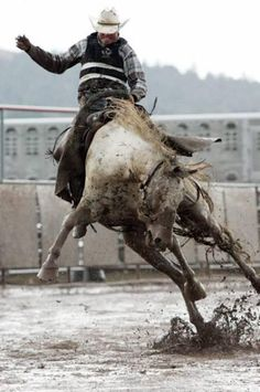 Horse, hest, rider, rodeo, mud, fence, action, wild, animal, beautiful, amazing, photo.