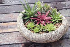 Mini Jardim de suculentas em vaso vietnamita