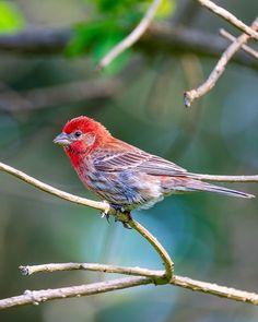 Photo by JR Miller | X-T2 | XF100-400mmF4.5-5.6 R LM OIS WR | F5.6 | 1/160sec | ISO400  #Fujifilm #xseries #XT2 #xphotographer #photography #nature #animal #animalphotography #wildlife #bird