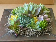 Succulent Centerpiece Succulent Garden Succulent by tobieanne, $32.00