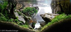 'The Crag' aquascape by Mustafa Erdogar 2013 AGA Aquascaping Contest - Entry #279