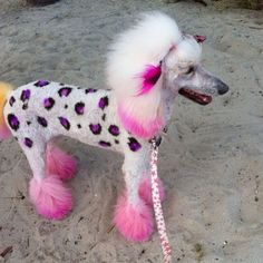 If I had a poodle....