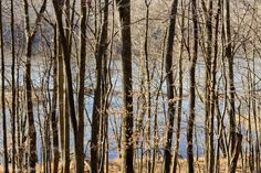 Winter Trees over Connecticut River - Hurd State Park, CT