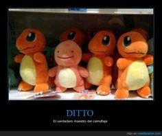 DITTO - El verdadero maestro del camuflaje   Gracias a http://www.cuantarazon.com/   Si quieres leer la noticia completa visita: http://www.estoy-aburrido.com/ditto-el-verdadero-maestro-del-camuflaje/