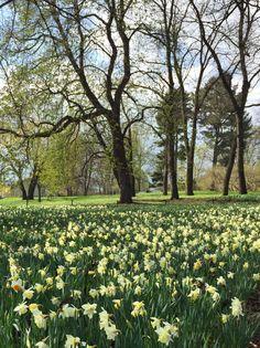 Vineyard, Golf Courses, Plants, Outdoor, Outdoors, Vine Yard, Vineyard Vines, Plant, Outdoor Games