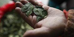 El papa podría masticar coca en #Bolivia, afirma portavoz