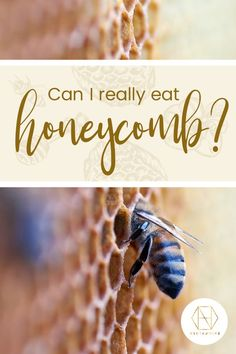 The good news is that you can enjoy honeycomb, produced by female worker honey bees. Isn't nature amazing? Rich in nutrients we've written a blog explaining why you should eat the products. Sign up to the newsletter for 20% off your first purchase. #honey #luxuryhoney #jarrahhoney  #nectahive #wellbeing #redgumhoney #honeycomb Pure Honey, Raw Honey, Honey Bees, Can I Eat, I Can, Australian Honey, Bee Do, Best Honey, Bee Pollen